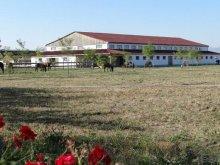 Accommodation Arcuș, Tichet de vacanță, Lipicai Guesthouse