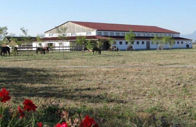 Lipicai Guesthouse Chichiș