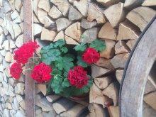 Guesthouse Scrind-Frăsinet, Adina Guesthouse