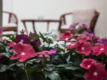 Bed & breakfast Hort, Melior Guesthouse
