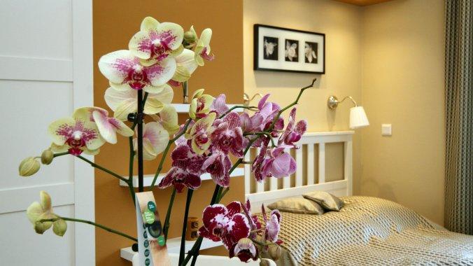 Orchid Apartment Eger