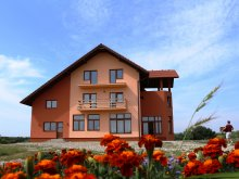 Accommodation Corund, Laleaua Pestrita B&B