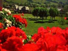 Accommodation Vârfu Dealului, Cristiana Guesthouse & Camping