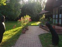 Accommodation Szentkozmadombja, Sárkány Bio B&B