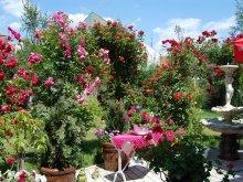 Cazare Banat cu Tichet de vacanță, Pensiunea Sofia