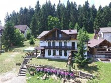 Accommodation Mănăstirea Humorului, Verde B&B