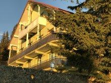 Villa Pleșoiu (Livezi), Virgilia Panzió