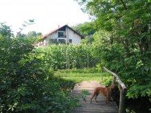 Accommodation Vértesszőlős, Erdőalja-Guesthouse