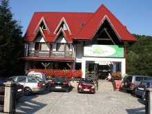 Accommodation Muntenia, Floarea Soarelui B&B