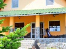 Accommodation Delnița, Vivi Guesthouse