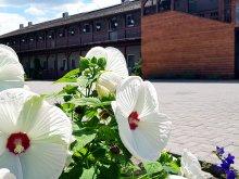 Accommodation Star Wine Festival Eger, Sweet-Life Wellness Apartments