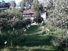 Accommodation Lacu Roșu, Paleu B&B