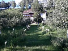 Szállás Vădurele (Alexandru cel Bun), Tichet de vacanță, Paleu Panzió