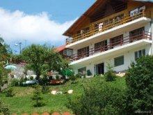 Accommodation Timișu de Jos, Montaniard Villa