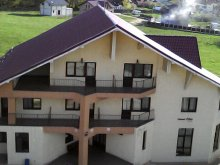Accommodation Valea Târgului, Păun Guesthouse