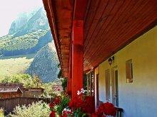 Accommodation Poiana Galdei, Vigh Guesthouse