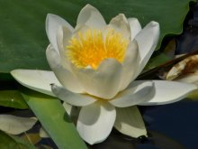 Cazare Uzlina, Pensiunea Floarea dintre ape