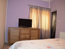 Accommodation Bihor county, La Curte Apartment