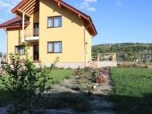 Accommodation Vaslui county, Diana Guesthouse