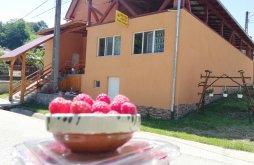 Panzió Aranyos-völgye, Fructele Pădurii Panzió
