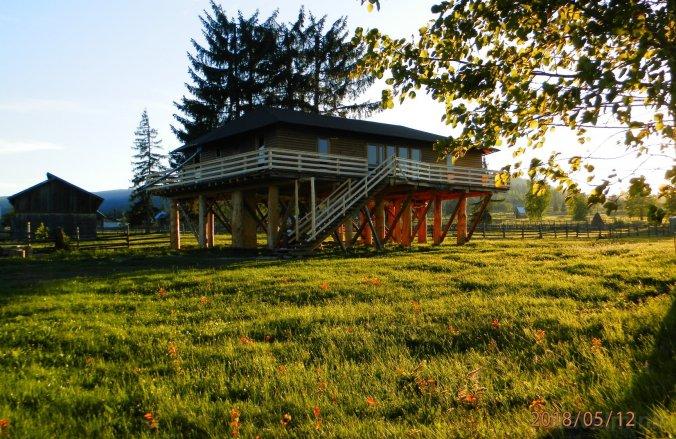 Căsuța din Copac - Cocoșul de Munte Guesthouse Șaru Dornei