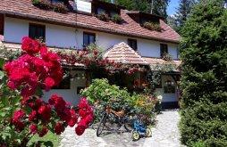 Villa Hargita (Harghita) megye, Sólyom Villa