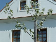 Guesthouse Nagytevel, Király Guesthouse