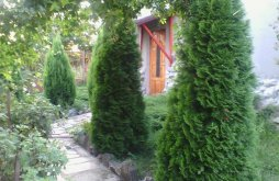 Guesthouse near Săvârșin Castle, Péter Annamária & Géza Guesthouse