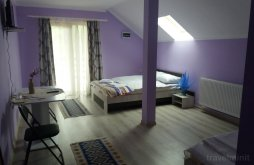 Accommodation Băsești, Primăvara Guesthouse