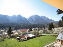 Accommodation Valea Viei, Edy Guesthouse