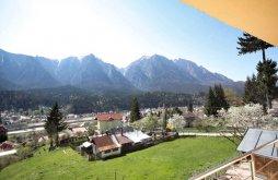 Vendégház Valea Brădetului, Edy Panzió