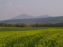 Szállás Borsod-Abaúj-Zemplén megye, Zempléni Vadvirág Vendégház