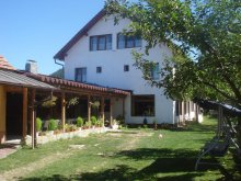 Accommodation Valea Cetățuia, Adela Guesthouse